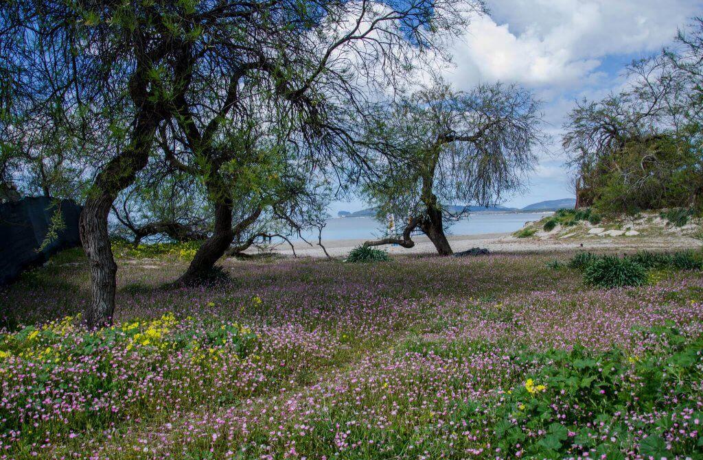 Natuur Sardinie